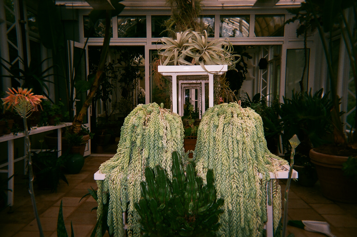 KYLEPECK_indoor plants