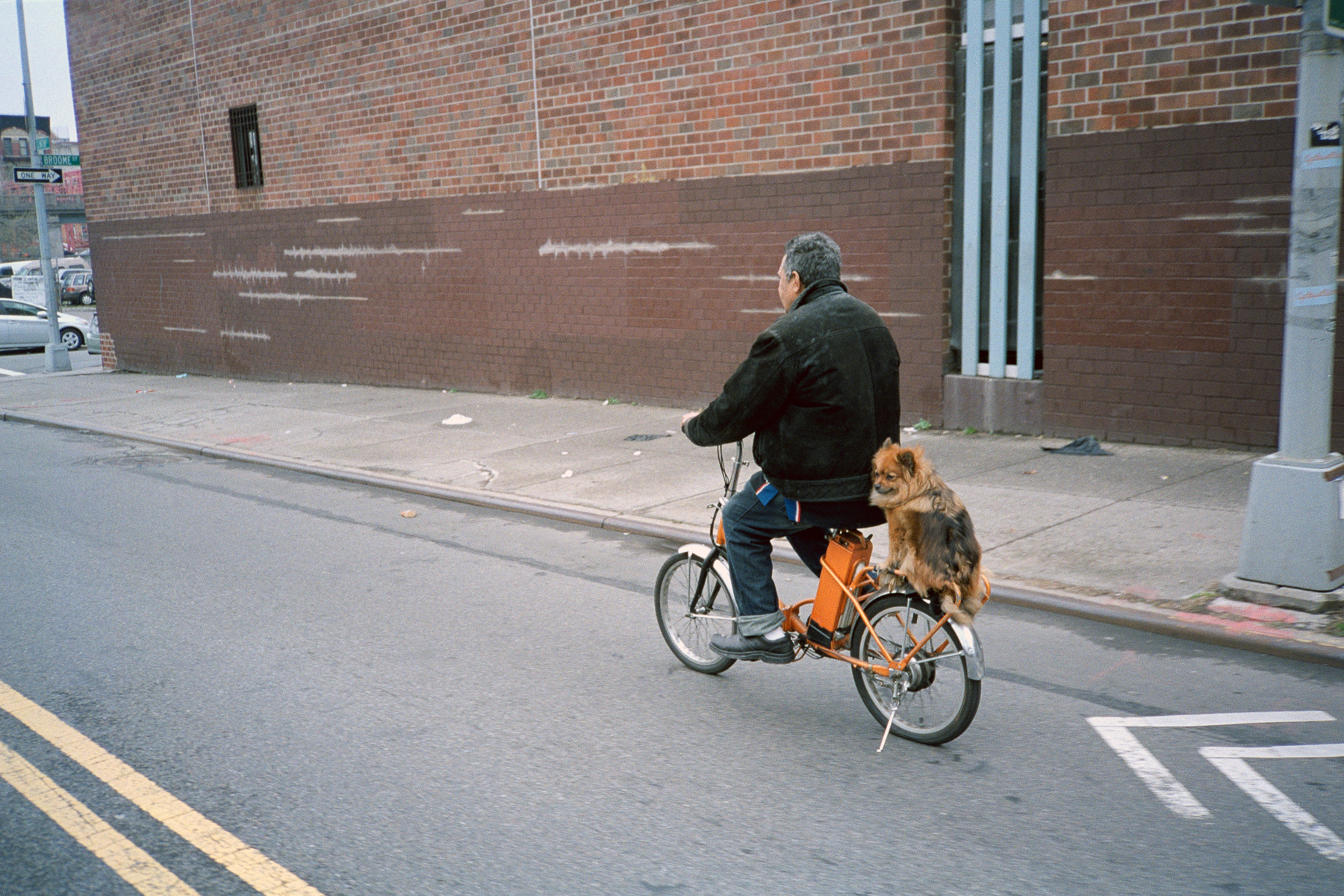 ScottMarceau_dog on bike