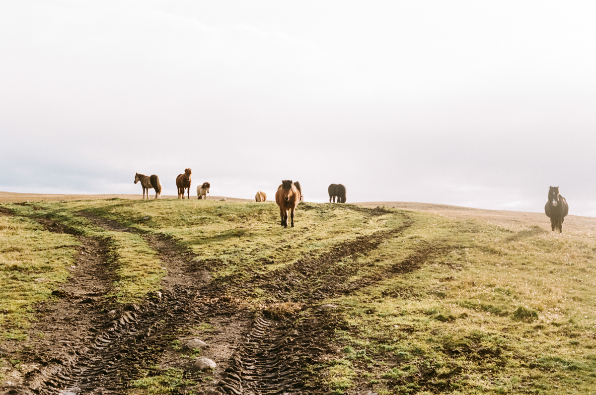 Kendra_Connally_Iceland_Touring-31